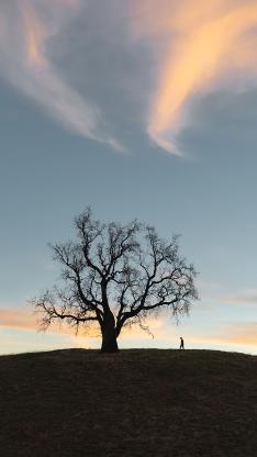 树木 干枯 枯枝 荒漠