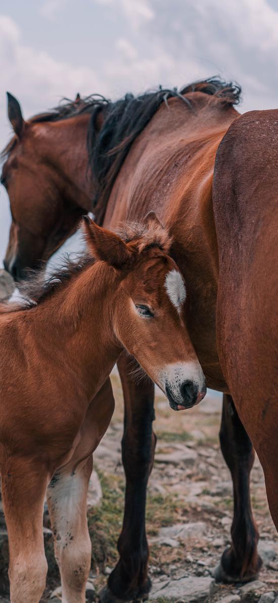马匹 牲畜 幼仔 马