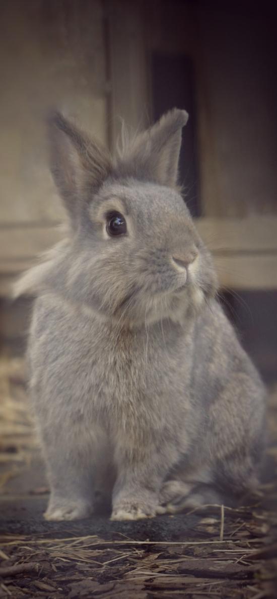 兔子 毛茸茸 可爱 宠物 萌