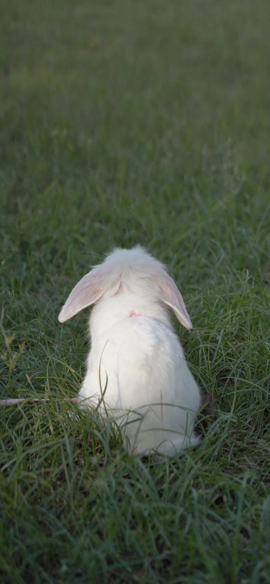 兔子 草地 草坪 宠物 背影