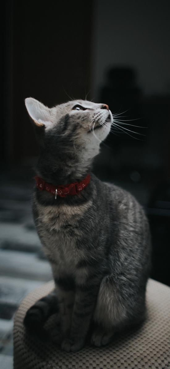 猫咪 喵星人 宠物 萌 黑暗
