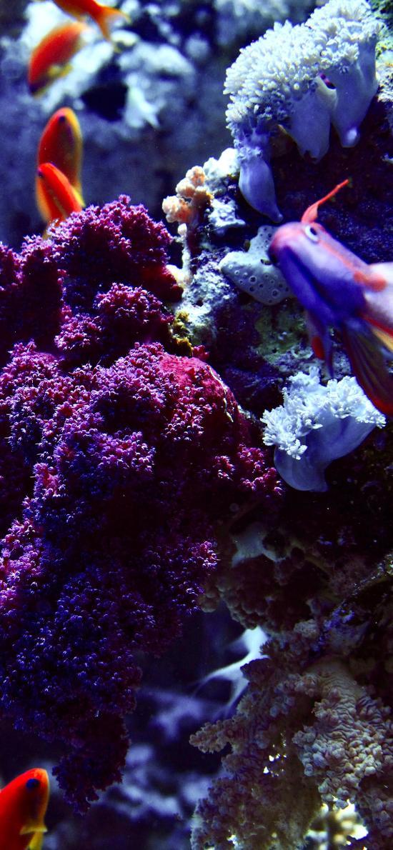 海底世界 珊瑚 海鱼 鱼群