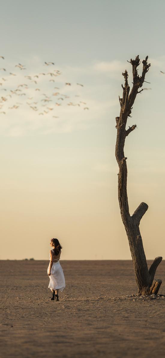 沙漠 树干 女孩 写真