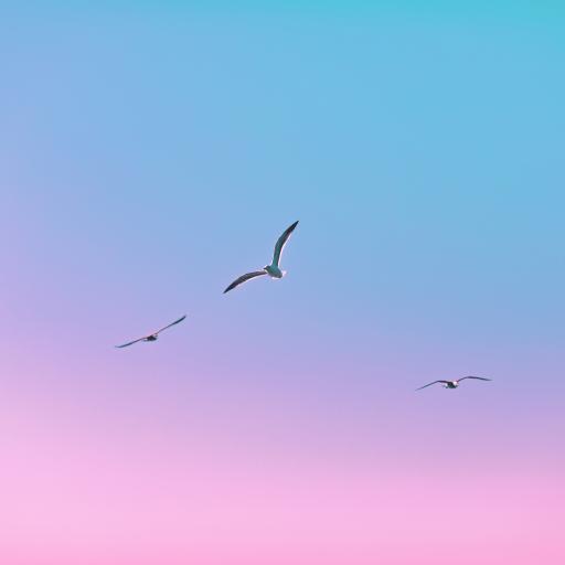 鸟 翅膀 飞翔 天空 渐变