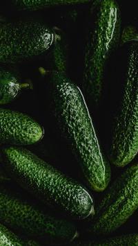 青瓜 蔬菜 绿色 浸泡