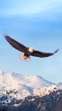老鹰 翅膀 飞翔 雪山