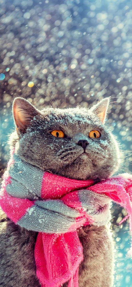 猫咪 下雪 围脖 围巾 宠物 喵星人