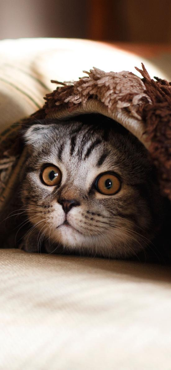 猫咪 喵星人 宠物 萌 毛毯