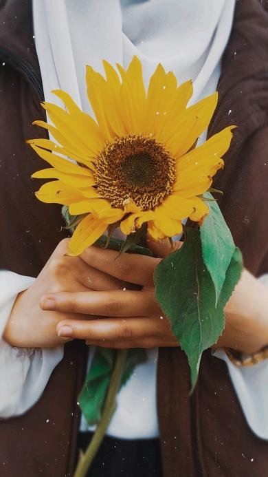 向日葵 鲜花 盛开 花朵 枝叶