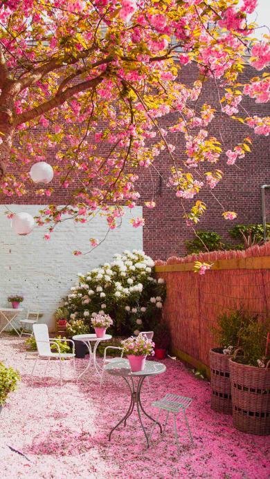 落花 枝叶 院子 粉色 鲜花