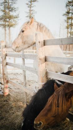 马场 饲养 白马 棕马