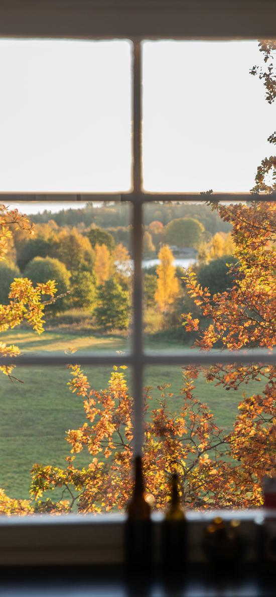 窗户 草坪 树木 美景