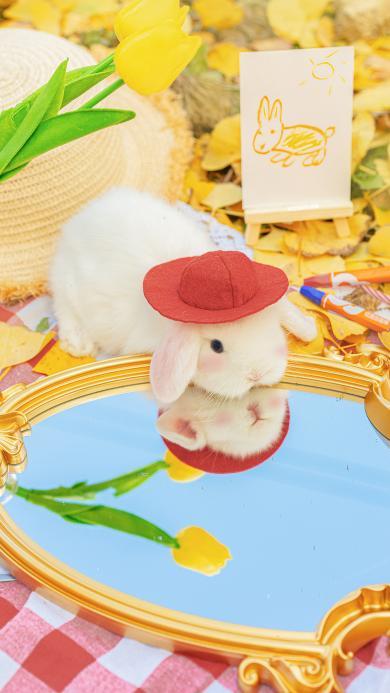 兔子 宠物 可爱 镜子 @名侦探牛奶喵