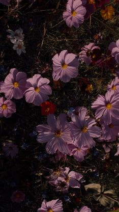 鲜花 盛开 花丛 草地 枝叶
