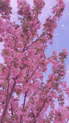 鲜花 粉色 枝头 盛开