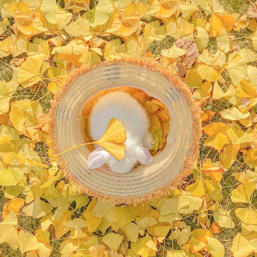 兔子 宠物 可爱 秋天 落叶 草帽@名侦探牛奶喵