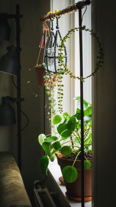 窗台 盆栽 绿植 绿化