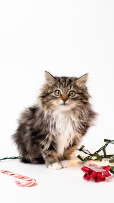 宠物 猫咪 毛发 可爱