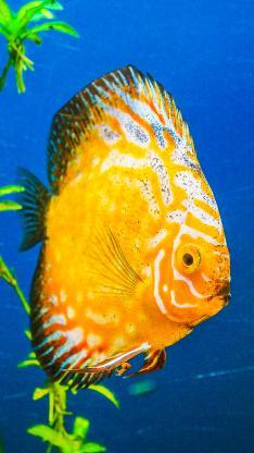 海鱼 神仙鱼 观赏鱼