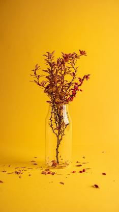 黄色背景 玻璃 花瓶 插花