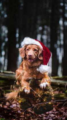 郊外 狗狗 圣诞帽 灯