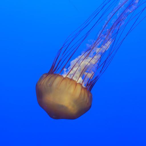 水母 海洋生物 蓝色 触须 透明